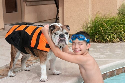 Keep dogs safe around swimming pool
