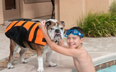 Teach your dog to swim in the pool