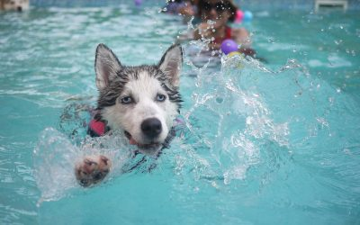 Keep new puppy safe around the swimming pool