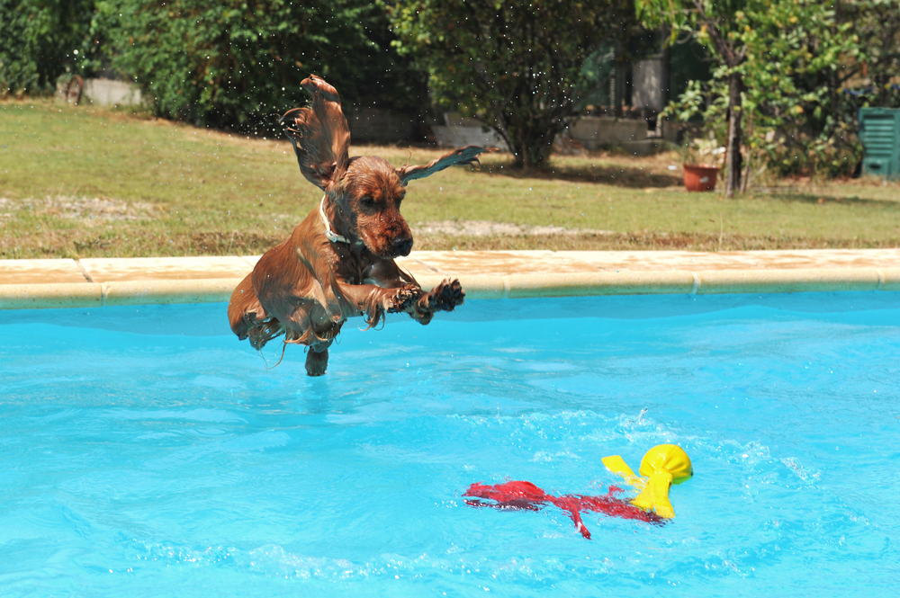 7 ways to swim safely with your dog